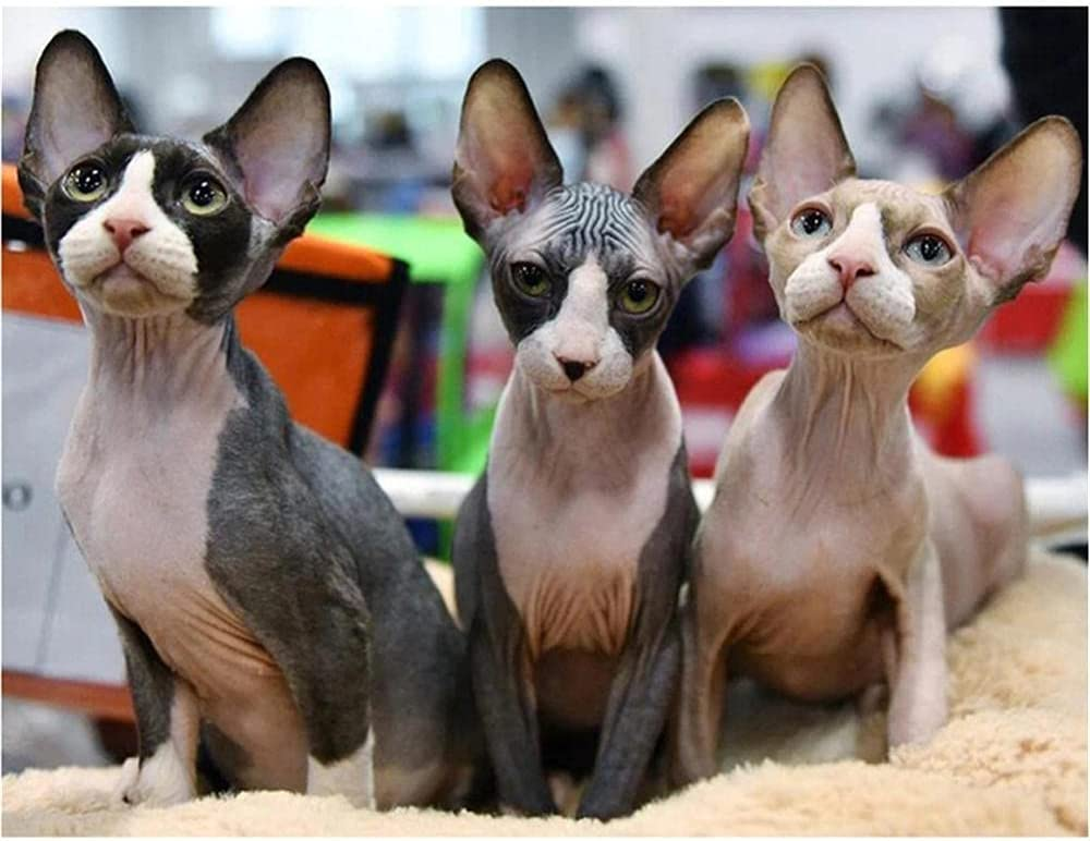depot DIY Selling and selling 5D Diamond Painting Kits for Adults 70 Round Sphynx Kids Cat