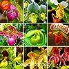 Nouvelle arrivée! 18 variétés de couleurs Cypripedium semences Bonsai Seed Fleurs Paphiopedilum Orchid Flower Seed 50 Pcs / Lot, # TRQOHU #2