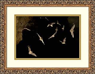 Framed Wall Art Print Brazilian Free Tailed Bat Group Emerging from James Eckert River Bat Cave at Dusk Texas by Michael Durham 17.62 x 13.62