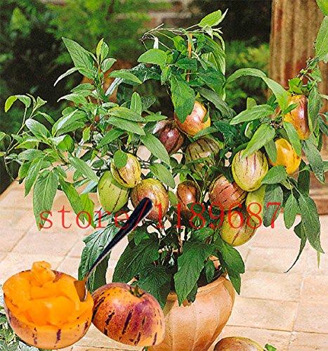 100 mini graines de melon sucré Melon Arbre de graines non OGM biologiques fruits et légumes pour le jardin de la maison de bricolage
