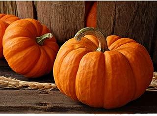 Best ornamental pumpkins for sale Reviews