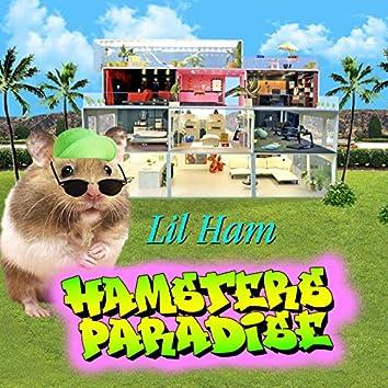 Hamsters Paradise