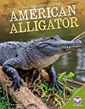 American Alligator (Back from Near Extinction)