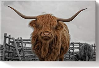 DIY Oil Paintings Paint by Numbers Kit for Adults/Kids Beginner Animal Art Close-Up Highland Cow Portrait Acrylic Paints on Canvas Wooden Framed Wall Art for Livingroom Bedroom 16X20In