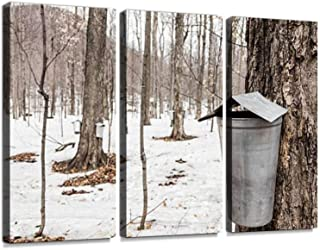 Forest of Maple Sap Buckets on Trees Print On Canvas Wall Artwork Modern Photography Home Decor Unique Pattern Stretched and Framed 3 Piece No Frame
