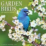 Garden Birds 2021 Wall Calendar