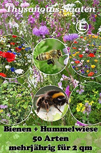 Thysanotusversand Bienen + Hummelwiese mehrjährig für 2 qm