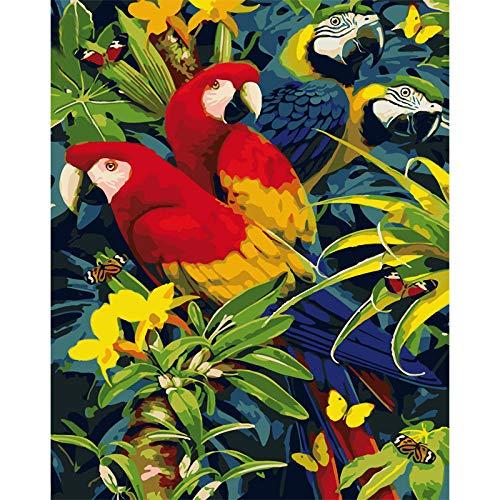 zhxx Malen Nach Zahlen Erwachsene Vier Schöne Papageien Tier Leinwand Hochzeit Dekoration Kunst Bild Geschenk Mit Rahmen 40X50Cm