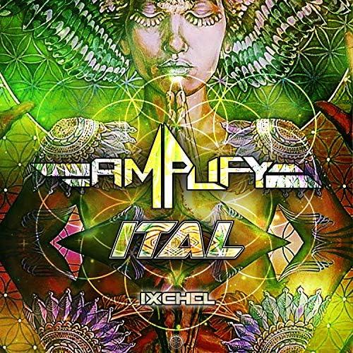 Amplify (MX) & Ital
