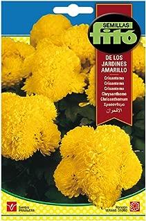 Semillas Fitó 3104 - Semillas de Crisantemo de los Jardines Amarillo