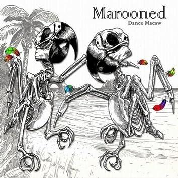 Dance Macaw