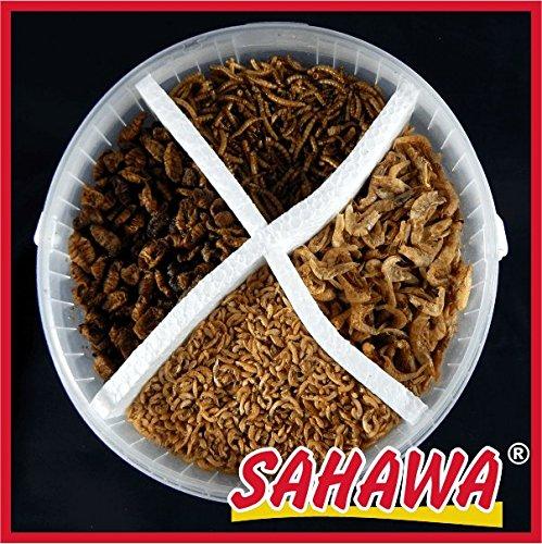 Koi-Naturfutter- Menü 5 L Eimer von SAHAWA® , Trockenfutter, Schildkrötenfutter, Reptilien, getrocknete Bachflohkrebse, Mehlwürmer, Shrimps, Seidenraupen Koifutter, Goldfischfutter …