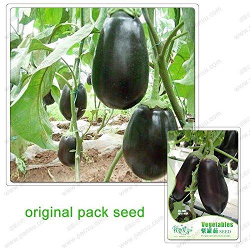 35 graines/Pack, graines de pot violet aubergine, aubergine pourpre, graines de plantation de jardin de légumes biologiques vert