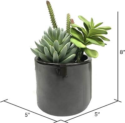 "Vickerman Potted Succulents Artificial-Plants, 8"", Green"