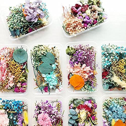 2PCS Flores Prensadas Secas,Flores Prensadas,Flores Prensadas Secas Naturales Mezcladas Múltiples,para Hacer...