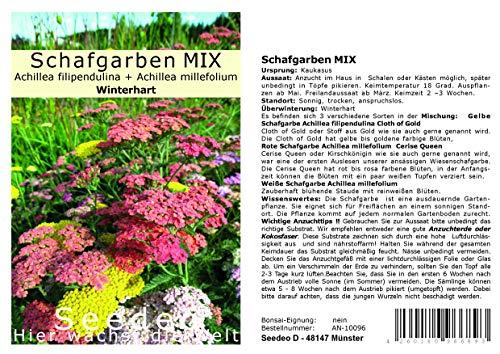 Seedeo® Schafgarben MIX (Achillea filipendulina + Achillea millefolium) 300 Samen