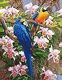 Paint by Numbers Kits, Tiere Gemälde für Erwachsene Kinder Senioren Junior, DIY Ölgemälde auf Leinwand mit Holz-Frame (Papagei)