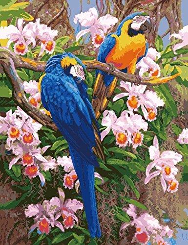 Medigy Paint by Numbers Kits, Tiere Gemälde für Erwachsene Kinder Senioren Junior, DIY Ölgemälde auf Leinwand mit Holz-Frame (Papagei)