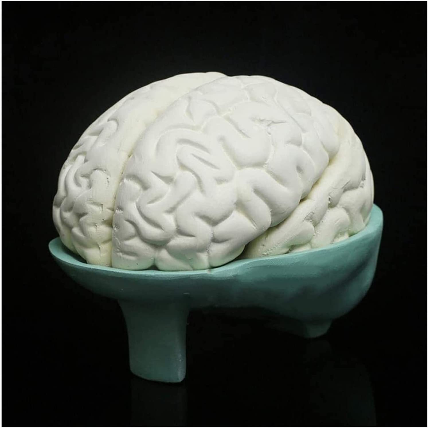 Brain Anatomy Recommended Model Human Structure Spring new work one after another Bi Teaching Hemisphere