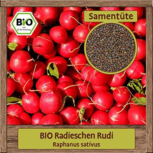 BIO Radieschen Samen mild scharfe Sorte Rudi ganzjährige Radies (Raphanus sativus) Gemüse Samen