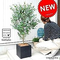 LAND PLANTS 観葉植物 ユーカリ(グニー) 黒色 ファイバー キューブ ポット 鉢植え 大型