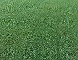 Best Bermuda Grass Seeds - Arden 15 Bermuda Review