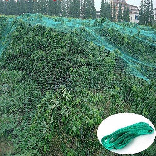 Panicy Easy Gardening Filet de Protection Contre Les Oiseaux, Couleur : Vert, 10M x 4M