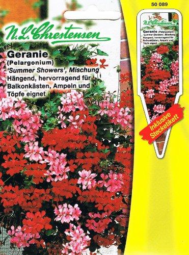 Geranie 'Summer Shower' Mischung , hängend, hervorragend für Balkonkästen ( mit Stecketikett) 'Pelargonium peltatum 'Hängepelargonien