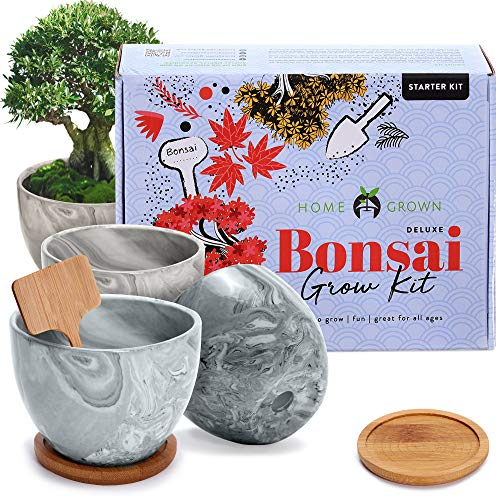 Deluxe 4 Bonsai Grow Kit - Complete Sacred Bonsai Tree Kit w/Indoor Seed Starter, Soil, Planter Pots, Drip Trays & Bonsai Tool Kit - Fig, Japanese Maple & Privet, Rockspray Cotoneaster Trees Garden