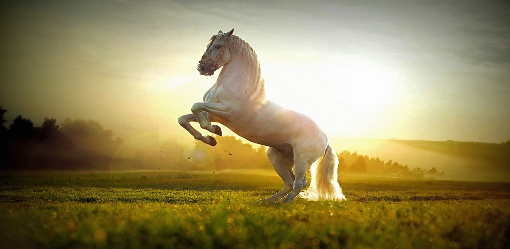 Horse HD Wallpapers