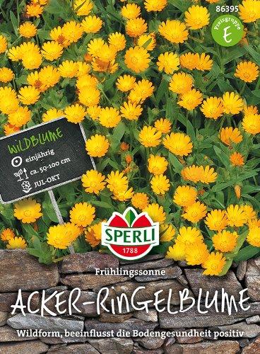 Sperli-Samen Acker-Ringelblumen Frühlingssonne