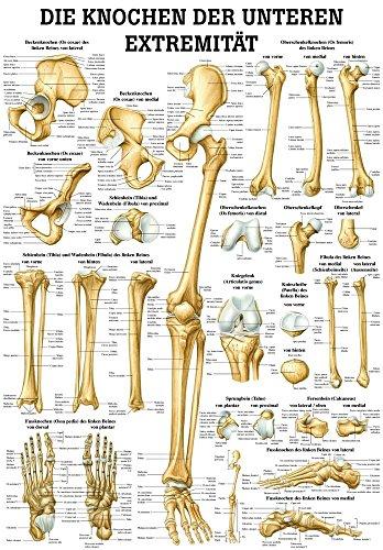Ruedige Anatomie MIPO67 De botten van de onderste Extramiteit Tafel, 24 cm x 34 cm, papier
