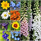 Bulk Package of 30,000 Seeds, Partial Shade Wildflower Mixture (15 Species) Non-GMO Seeds By Seed Needs