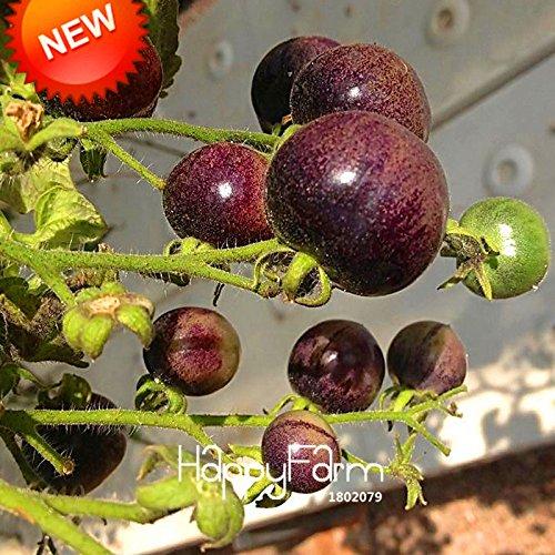 Nouvelle arrivée! Red Pearl tomate Graines, fruits et légumes en pot Mini tomate Graines Balcon pour Home Garden 100 pcs / sac, # 0YARRN
