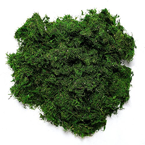 Byher 92926 Preserved Forest Moss, Fresh Green (8OZ)