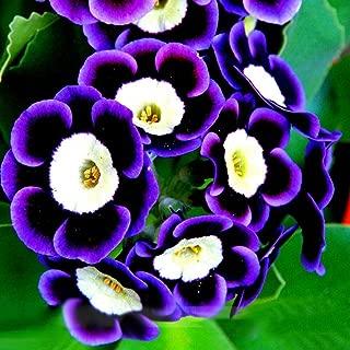 100 Dwaft Petunia Seeds Perennial Heirloom Mixed Colors Trailing Flower Garden