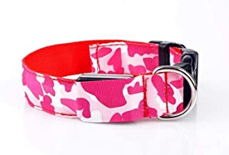 jack russell collars and leads