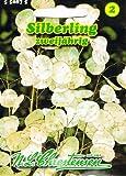 Silberling Lunaria annua Trockenblume
