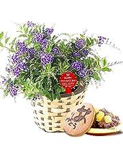 母の日 の プレゼント デュランタ5号鉢 おいもやどら焼き 花とスイーツ 花鉢 生花 母の日ギフト (デュランタ)