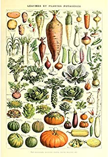 Vintage Poster Print Art Kitchen Vegetable Identification Reference Chart Botanical Science Plant Carrot Pumpkin Potato Home Wall Decor (20.87'' x 31.5'')
