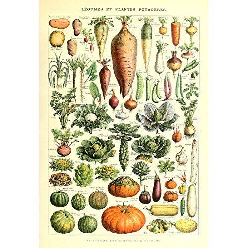 Meishe Art Poster Kunstdrucke Jahrgang Plakate Drucken Plakatdruck Gemüse Sammlung Identifizierung Bezug Illustrationen Karotte Kürbis Kartoffel Zu Hause Mauer Kunst Wand Dekor (20.87'' x 31.50'')