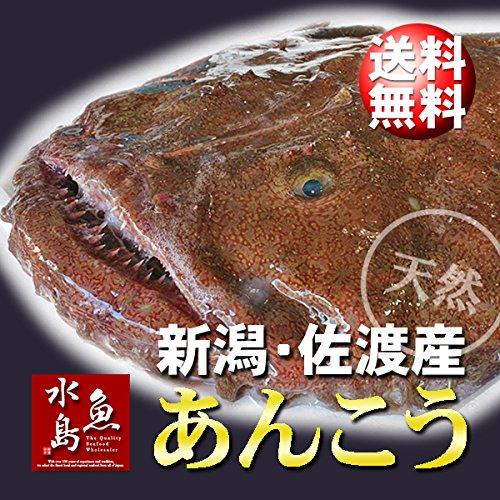 魚水島 新潟・佐渡産 天然 あんこう アンコウ 一匹丸もの 5kg以上