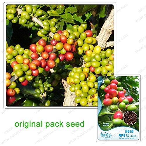 10 graines/Pack, Chine Yunnan azuki graines de café de haricots, alimentation grains de café vert thé alimentation crue