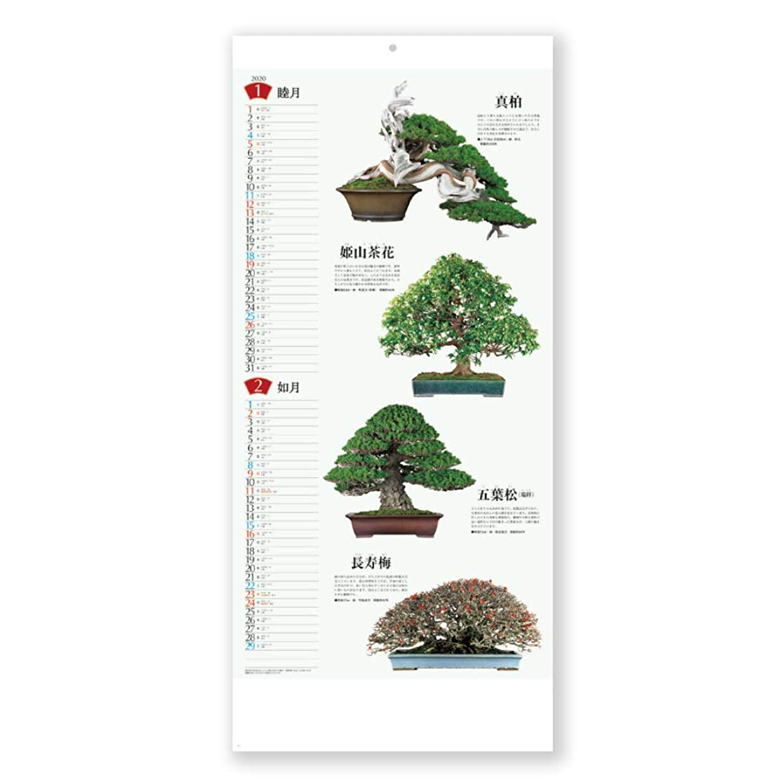 しない寝る複製新日本カレンダー 2020年 カレンダー 壁掛け 盆栽 NK152