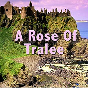 A Rose of Tralee