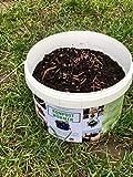 Kompostwürmer Kaufen 300 Stück in Spezialeimer Kompostbeschleuniger Garten Wurmkomposter Wurmkiste Lebend Regenwürmer