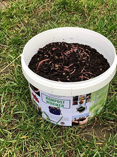 Kompostwürmer Kaufen 250 Stück in Spezialeimer Kompostbeschleuniger Gartenwürmer Wurmkomposter Würmer Lebend Regenwürmer