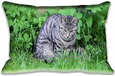 Cat 20X30inch Pillow Cushion Cover with Zipper Standaed Queen Size Pillowcase(Twin Sides)