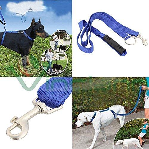 Formation Laisse pour chien, Bleu en nylon pour jogging, marche