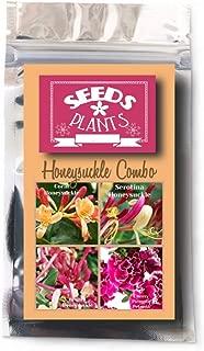 Bulk 3 Honeysuckle Seeds 450 Seeds +3 Plant Markers & Free Carnations - Coral, Serotina, Belgica